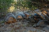 /aldabra